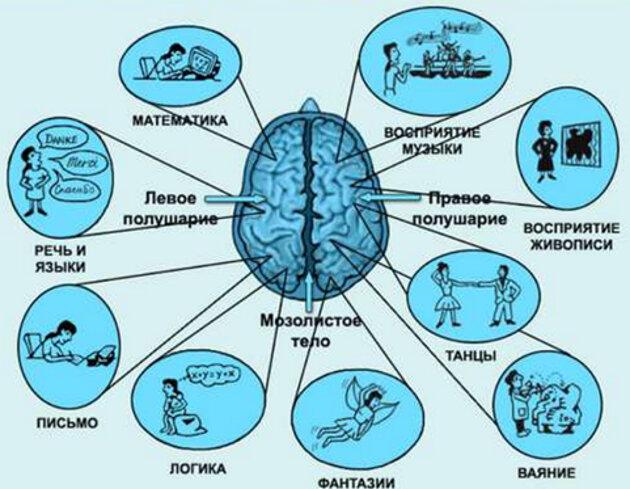 Кинезиологические упражнения