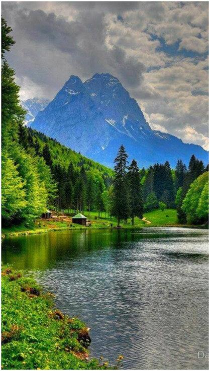 Живая и дикая природа планеты